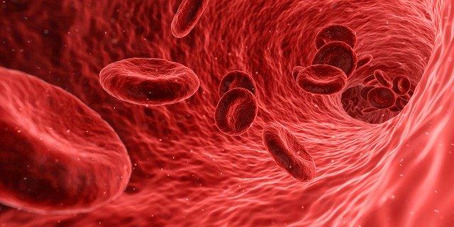 тромб клетки крови фото