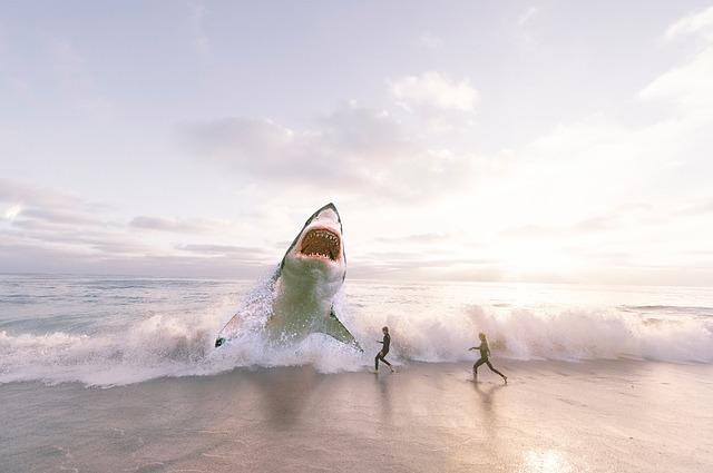 shark 3004153 640