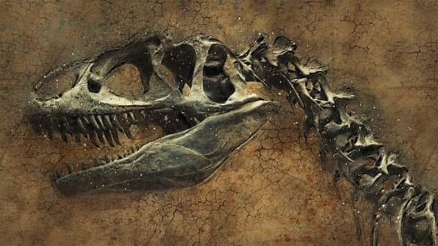 Динозавры окаменелость скелет фото