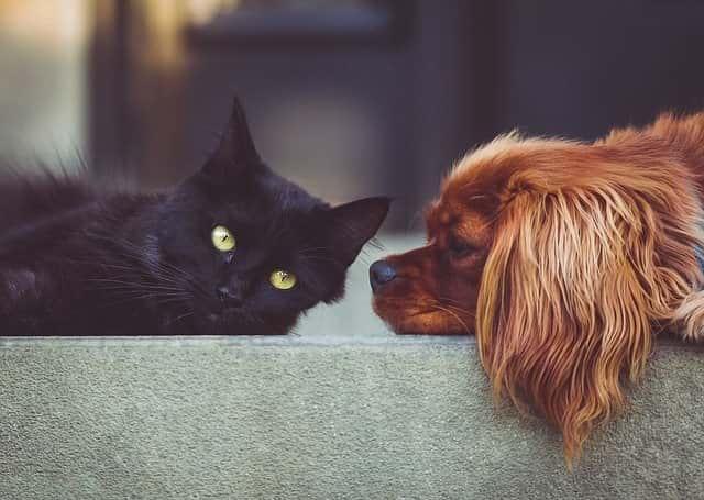 животные кот собака фото