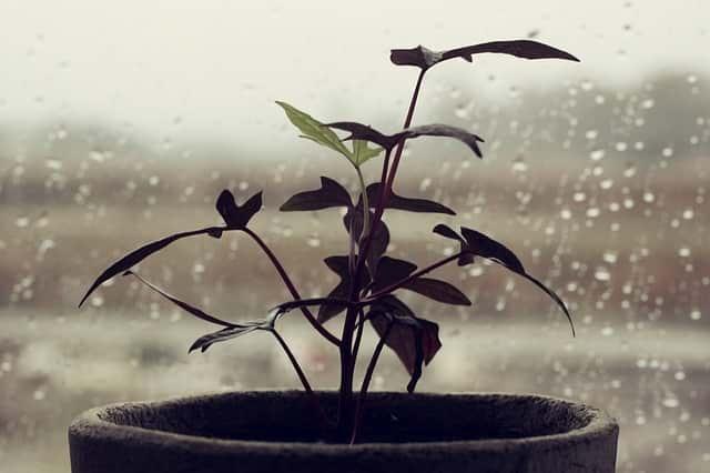 plant 4587784 640 1
