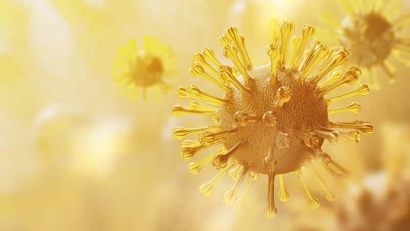 Ученые: организм способен запоминать коронавирусы