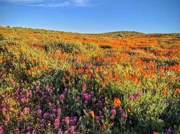 Долина Антилоп в Калифорнии фото