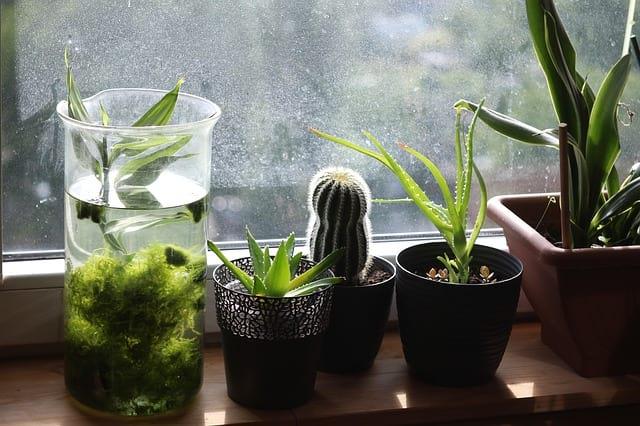комнатные растения подоконник фото