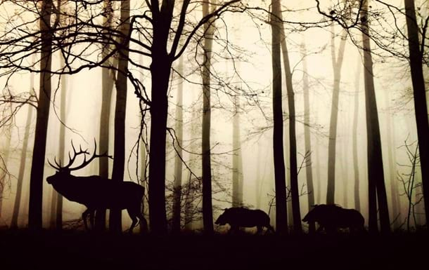 Природа лес фото