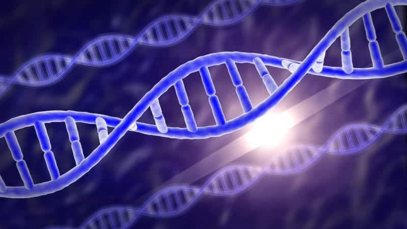 ДНК картинка