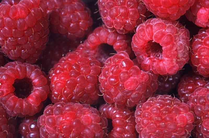 Малина ягода фото