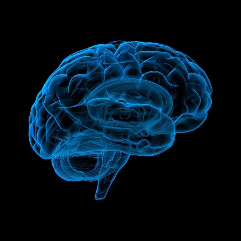 Мозг человека неоновый картинка