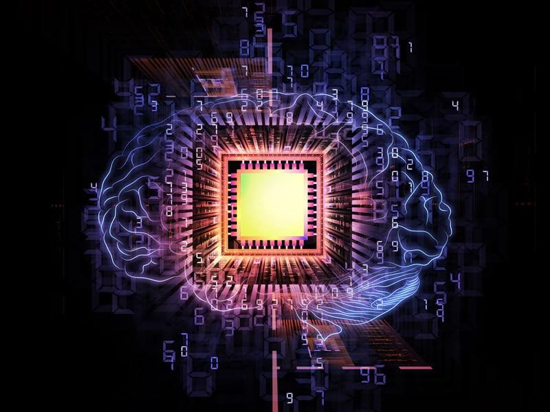 человеческий мозг изображение