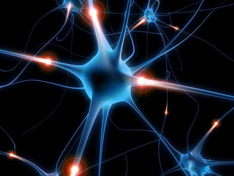 Нейроны подсветка картинка