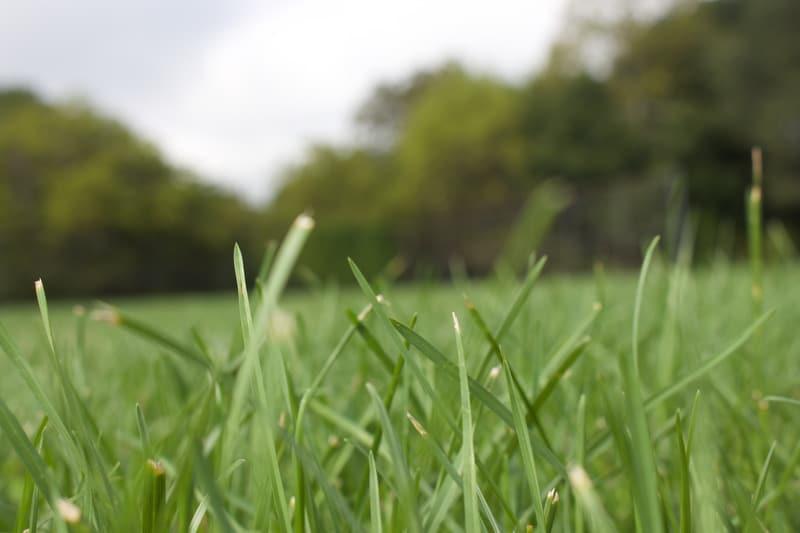 трава фото