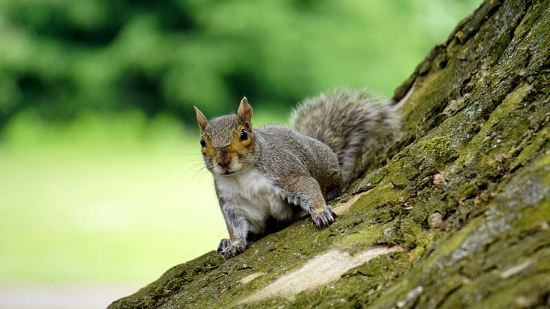 Canva Grey Squirrel on Wooden Trunk during Daytime 1