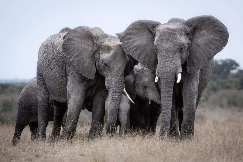Слон хоботом убил смотрителя испанского зоопарка