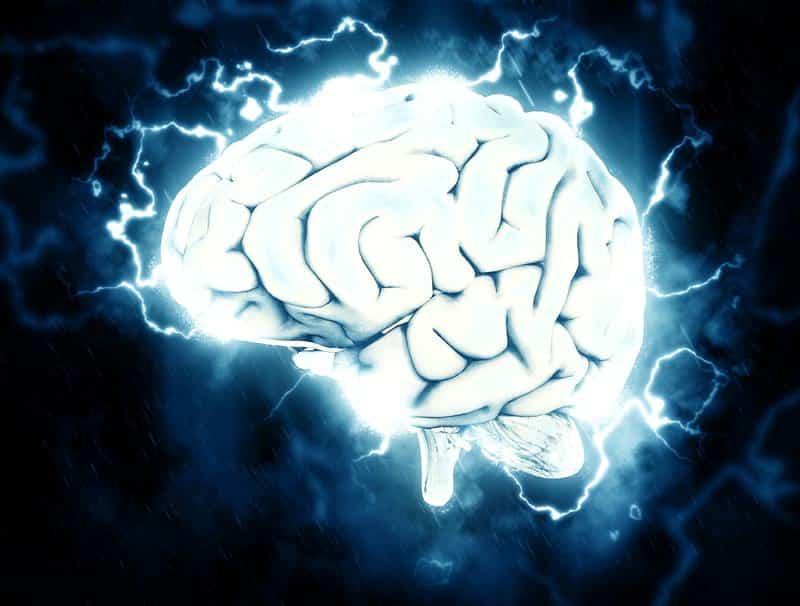 мозг человека изображение