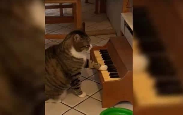 кот играет на пианино фото