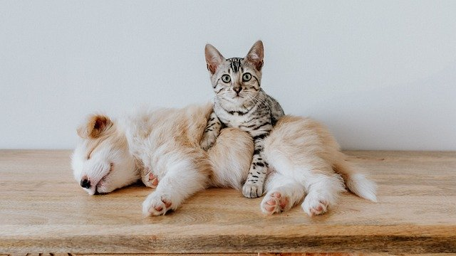 Домашние животные изображение