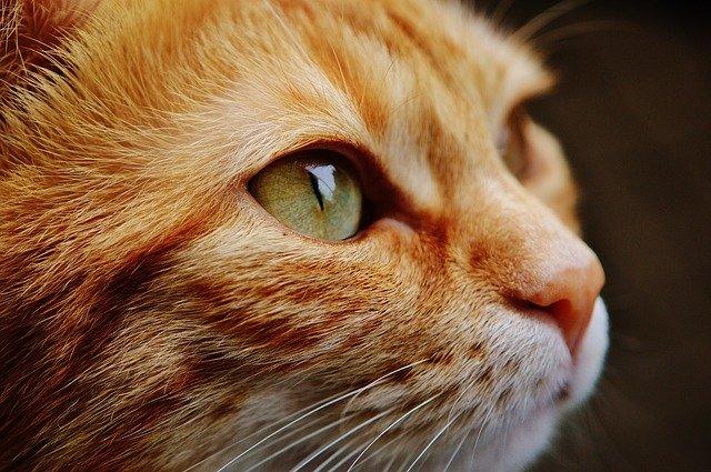 кошачий взгляд фото