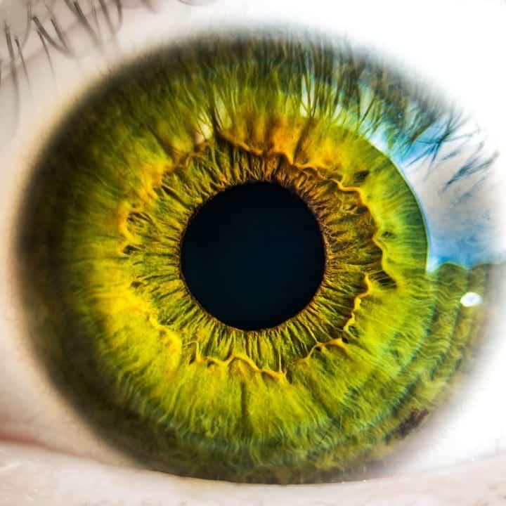 Сетчатка глаза фото