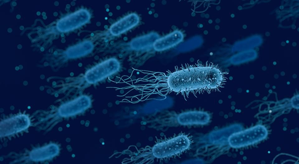 Бактерии изображение