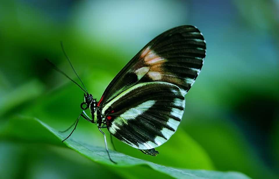 бабочка фото