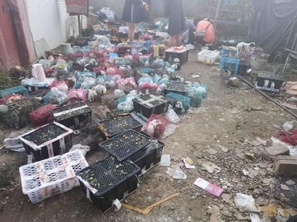 Na sklade v Kitae ostavili umirat tysyachi domashnih pitomtsev