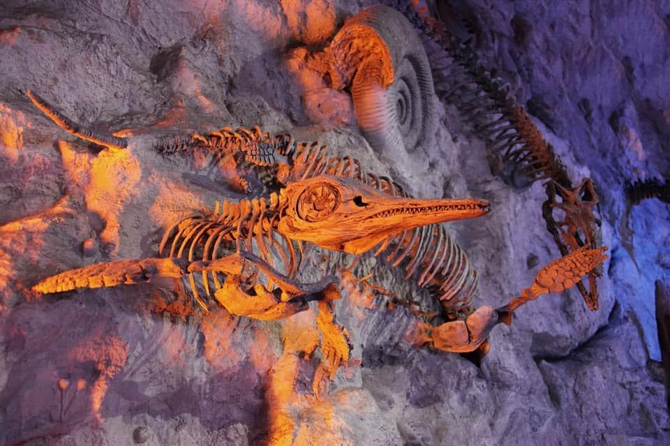 скелеты древних животных фото
