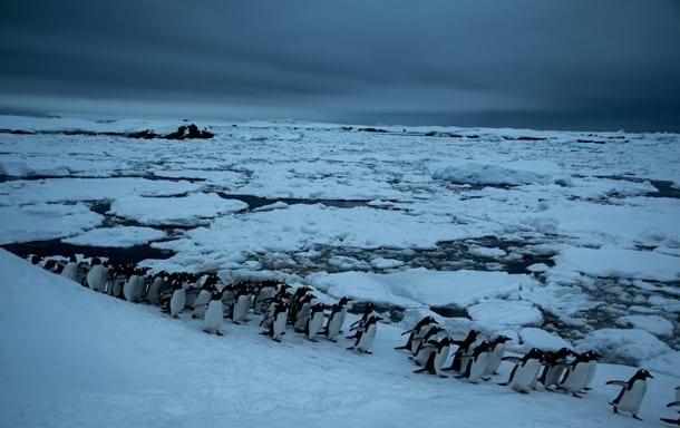 Пингвины Антарктида фото