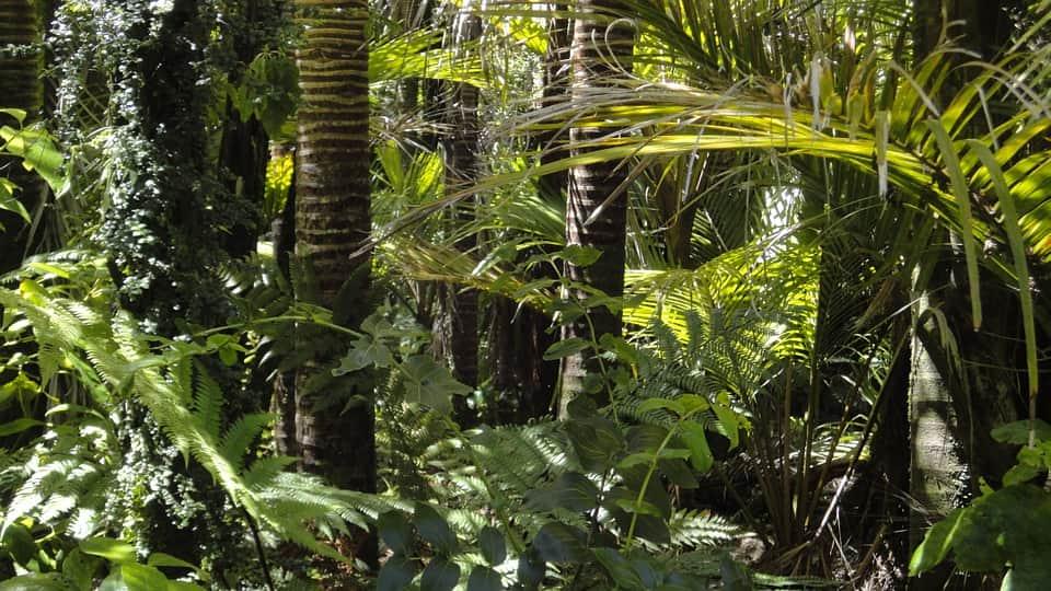 тропический лес изображение