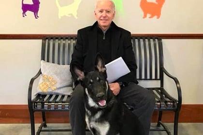 джо байден и его собака фото