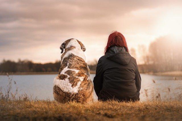 Собака животные питомец фото
