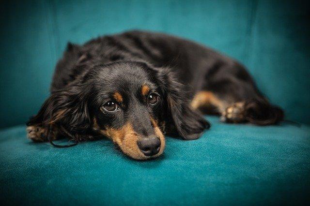 Собака животное домашние животные фото