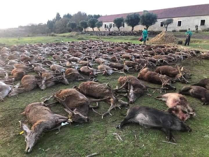 массовый отстрел животных фото