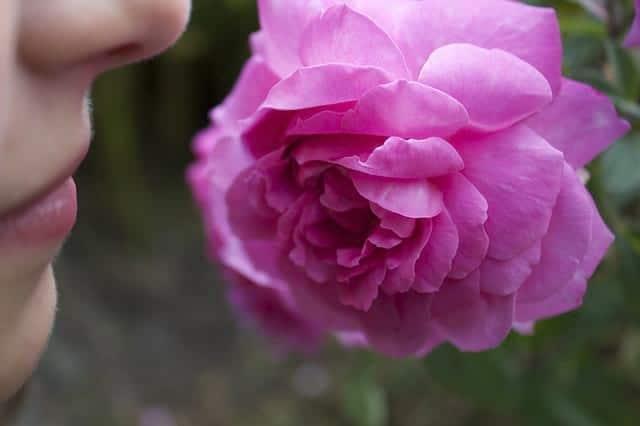 Цветок девушка фото