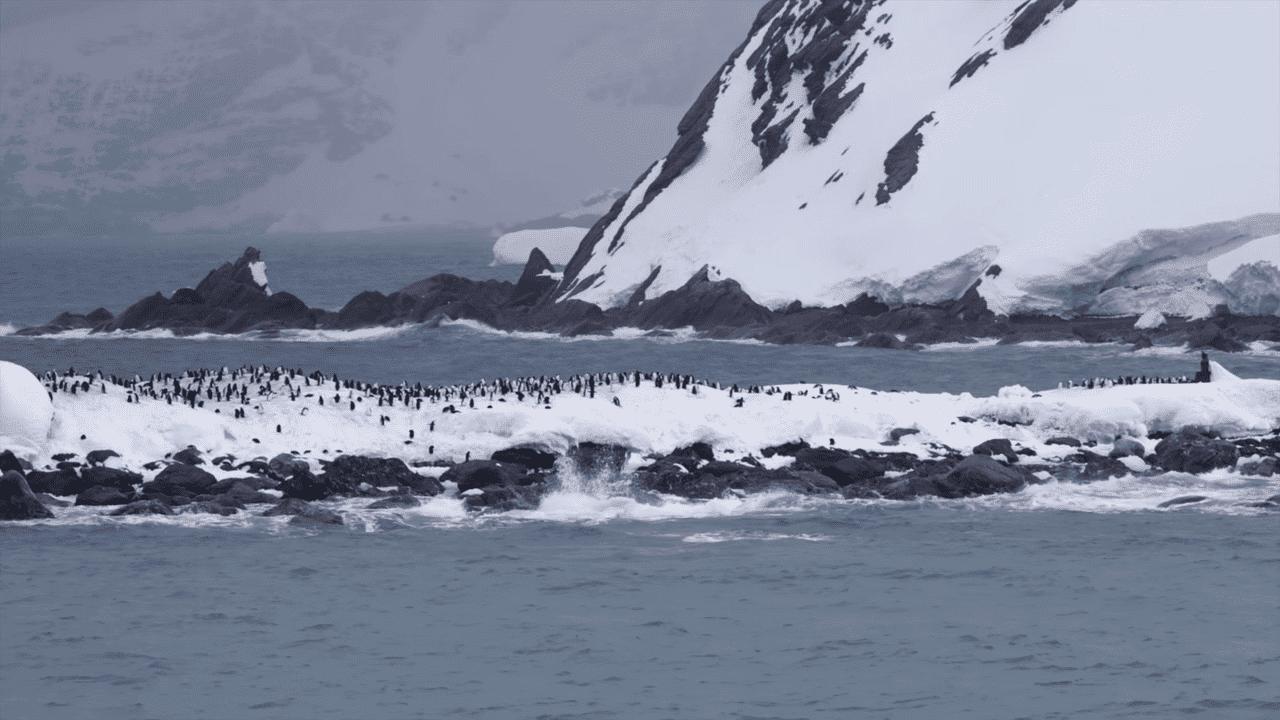 Elephant Island in the South Shetland Islands of Antarctica 0 18 screenshot 1