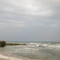Разлив нефти возле берегов Израиля фото