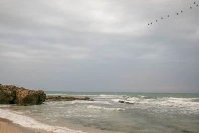 Нефтепродукты продолжают загрязнять лучшие израильские пляжи
