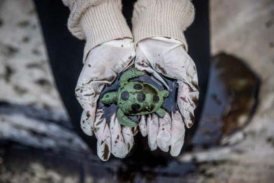 Разлив нефти в Израиле: как это произошло и что можно сделать в будущем