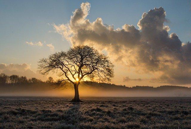 Пейзаж небо облака дерево фото