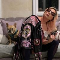 Певица Леди Гага и ее бульдоги фото