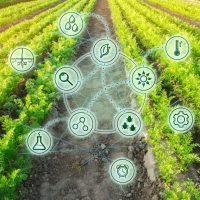 Удобрения сельское хозяйство химия фото