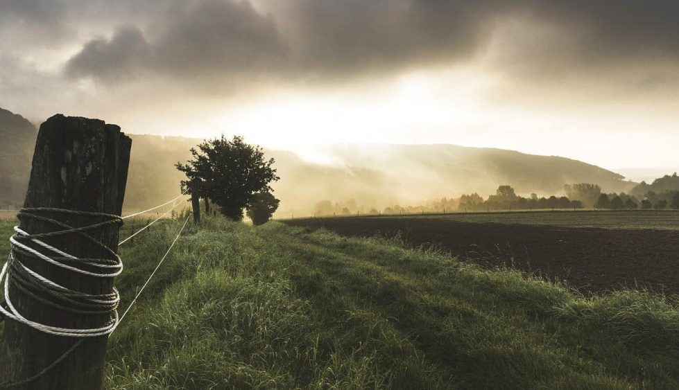 ферма фото трава природа