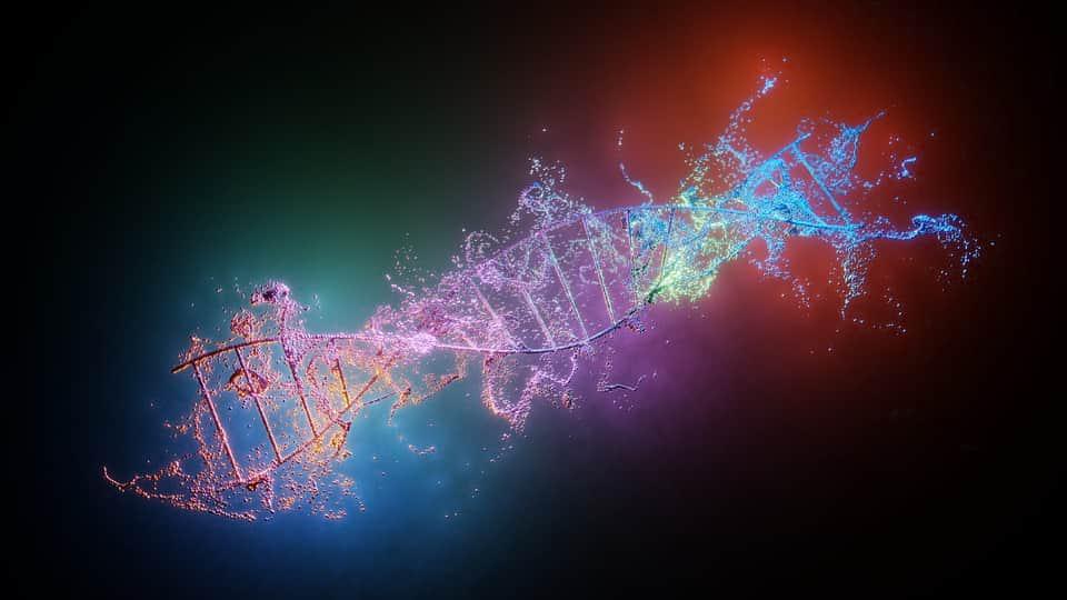 ДНК человека изображение