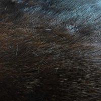 Мех животных фото