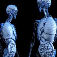 Скелет кости фото