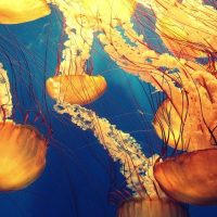 Медузы фото