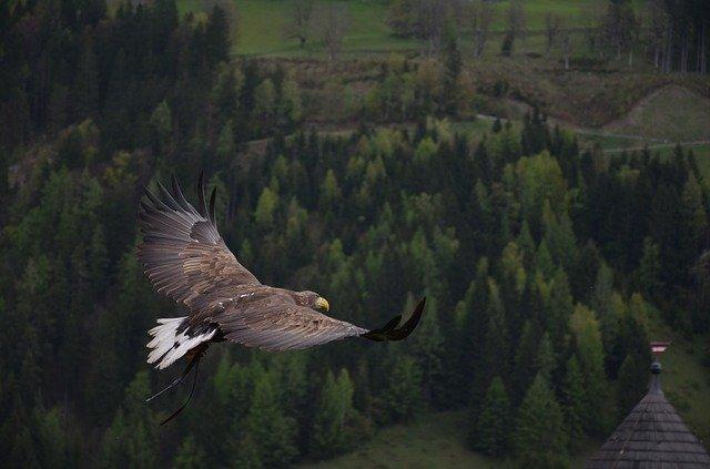 Птица орел фото