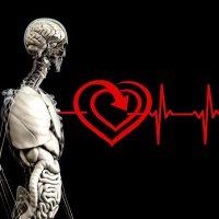 Тело человека изображение