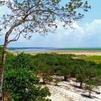 Амазонка фото