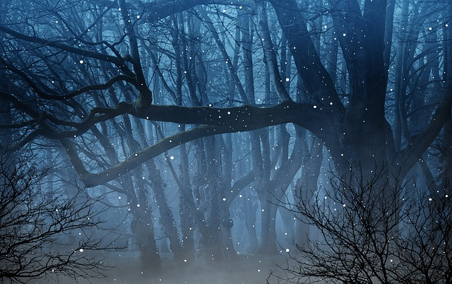 Светлячки в лесу картинка