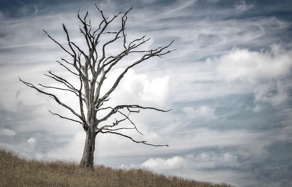 Дерево фото